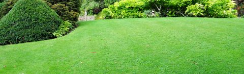 Grass and Turfing Services in and around the Surrey area