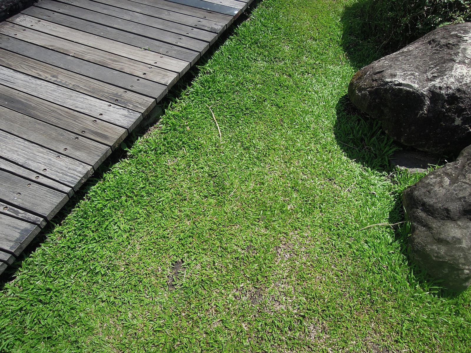 artificial grass Wallington